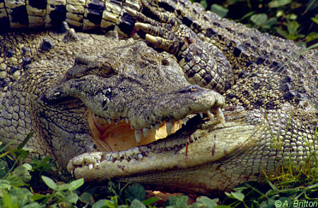 !potm mar00 'My crocodiles don't need much looking after – never more than an hour a day ...